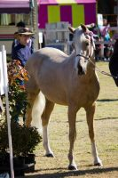 STOCK Canungra Show 2013-31 by fillyrox