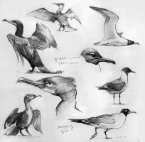 Bird Studies 3 by yolque