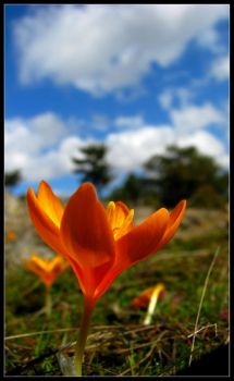 crocus ankara by unclesim