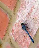 Dragonfly by JakeGreen