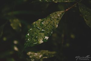 Right After the Rain.. by yunisuchan