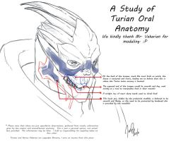 Study: Turian Oral Anatomy by KraeHi