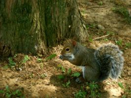 Resting Squirrel by TheLimeTangerine