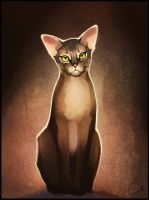 Diana. My abyssinian cat by GaudiBuendia