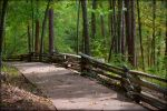 The Path by 6to9Nature