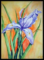 Mountain Lily watercolour by Immortelle