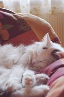 sleepy kitty by look-and-see