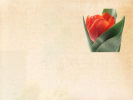 Solo Tulip by Dody49