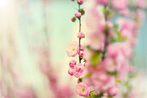 Blossom in pink by Strawberry-Mood