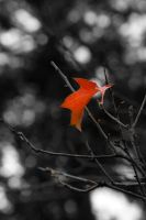 Autumn Leaves 3 by austinh2o