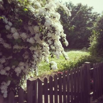 Flowers and Fence by iriasyrenee