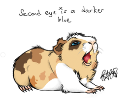 CLOSED Guinea Pig Name your Price Adopt by FAFs-adoptables