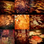 Autumn Colors by Eredel