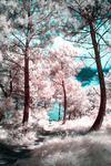 Infrared - Through Grass and Trees to Sand 1 by CrystalClarities