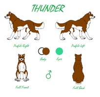 Thunder Reference Sheet 2015 by TheDragonInTheCenter