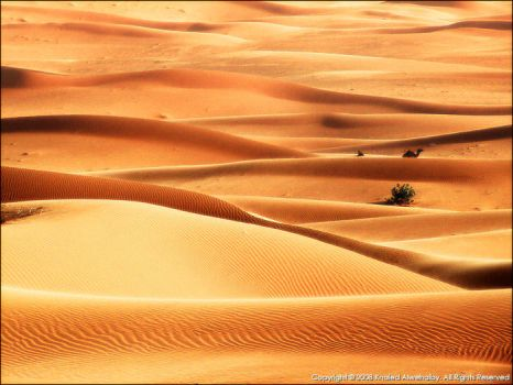 Lonely II by KhaledPhotography