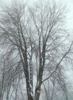 Snowy Tree-2 by Rubyfire14-Stock