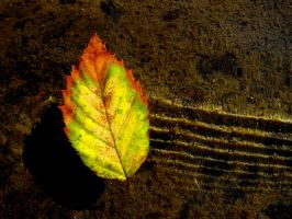 Leaf by CatherinetteRings