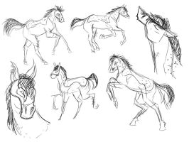 Horse Studies by bambiin