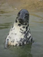 Seal by AndrewNickson