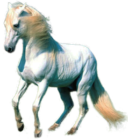 White Horse PNG by LG-Design