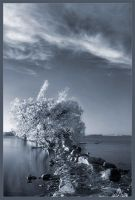 Evening in IR by IgorLaptev