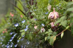 Flowers at Inveraray Castle by TKethry