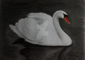 The Swan by IsschaI