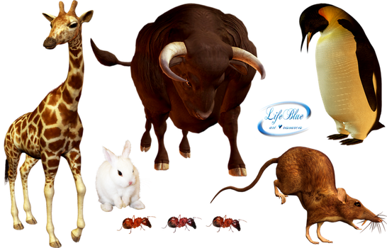 So beautiful animals - PNG by lifeblue