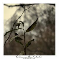 Memories I by OliviaMichalski
