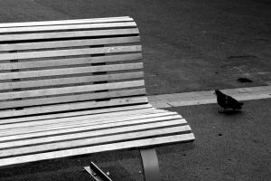 bench and pigeon by loLaurer
