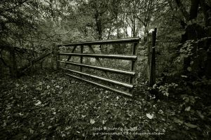 Off the Trail BW by mr-sarcastic1984