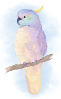 Cockatoo by rachelxiang