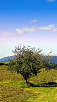 Fresh grass and old apple tree by patrickjobst