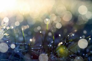 Cold wet sunny morning by George---Kirk