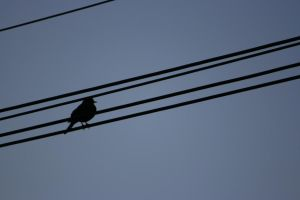 Bird on a wire by Mortitia212