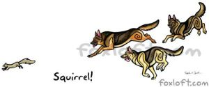 Squirrel! German Shepherd Dogs by Foxfeather248