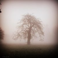 November fog by lostknightkg