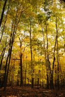 Golden Forest by Manbehindthelens