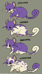 Rattata by MikeyOpossum