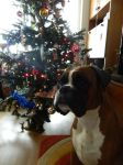 Marek and christmas tree by Falkenhund
