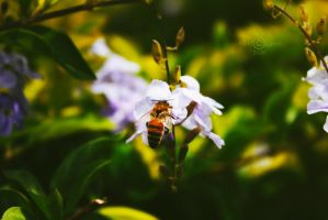 Busy Bee by Squiddles66