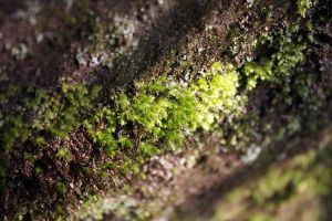 moss-grown by fairytale-gone-bad