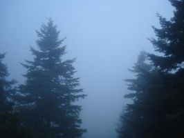 Foggy Forest 4 Stock by MiloshJevremovic