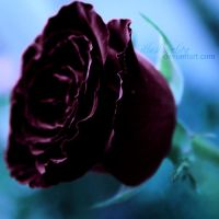 one wish by illusionality