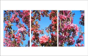 Darling Buds of May by Forestina-Fotos