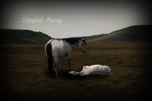 .:.Slipped Away.:. by QuaxyKitKat