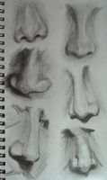 Noses study by black--monkey
