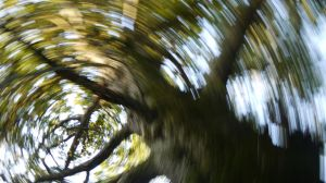 Spinning Tree by LouisTN