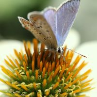 Butterfly by HeikoRademacher